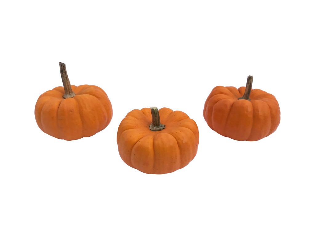 mini-pumpkin-1